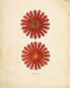 illustration, botanic