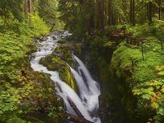 romper imágenes, caídas wallpapers, vector corriente, fotos de los ríos, el musgo, los fondos de madera, hojas imágenes, verdes