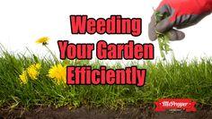 Weeding Your Garden Efficiently