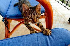 Ermis #cats