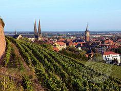 Obernai, France #France #Alsace