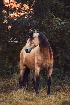 Stunning horse photography. Gorgeous colored horse (95) Hafner Photography - Photos