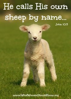 The gatekeeper opens the gate for him, and the sheep listen to his voice. He calls his own sheep by name and leads them out. Lord Is My Shepherd, The Good Shepherd, Bible Verses Quotes, Bible Scriptures, Healing Scriptures, Walk In The Spirit, Online Bible Study, Web Design, Bible Love