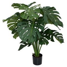 Faux Monstera Planter BIG plant
