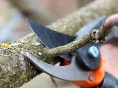 Kedy strihať ovocné stromy, stromčeky ju hu hu by kríky Farm, Garden Tools, Gladiolus, Insect Hotel, Home And Garden, Flowers, Hydroponics, Garden, Gardening Tips