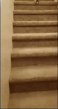 catgifcentral:  @@kitten rolls down stairs@@ Cat... - HighlandValley