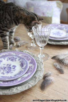 Live the purple plates. Kitty taking a drink...feathers on the table make me wonder what kitty is washing down... ;)