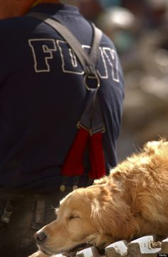 A search dog sleeps behind a New York firefighter at the scene of the World Trade Center. (Photo by Preston Keres/US Navy/Getty Images)