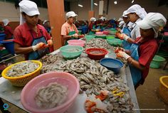 "The headlines were devastating. ""Global supermarkets selling shrimp peeled by slaves."" ""Nestle confirms labor abuse among its Thai suppliers."" ""'Sea slaves': The human misery that feeds pets and livestock."" Revelations of slavery in the seafood industry dominated the media, but there was little consensus about how to address the issue. Shortly after the stories broke, @ConservationOrg's Jack Kittinger attended a key meeting of the Conservation Alliance for Seafood Solutions, an umbrella…"