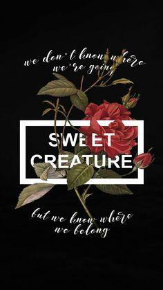 Harry Styles Wallpaper Lyrics Sunflower