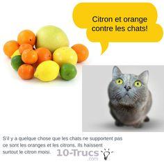 Plus de 1000 id es propos de animal insecte sur pinterest pigeon bols pour chiens et chats - Eloigner les chats du jardin ...
