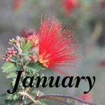 gardening calendar for Phoenix area -- desert botanical garden