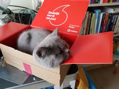 On the box is written 'Finally I am yours' in Dutch. You get these when you order a phone but the cat went in this box to sleep and the moment was just too beautiful!