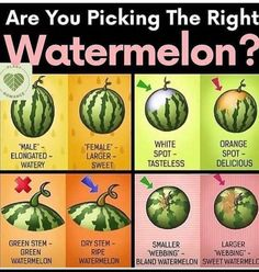 It's always a hit or miss for me trying to find a sweet watermelon. It's always a hit or miss for me trying to find a sweet watermelon. I'm definitely trying this method this summer for picking this really hydrating fr. Watermelon Plant, Sweet Watermelon, Watermelon Ripeness, Watermelon Facts, Aquaponique Diy, Cooking Tips, Cooking Recipes, Food Tips, Diy Food