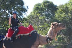 Essential Oils We Trust's, Paul Pike practises his camel riding skills in preparation for the World Peace Caravan.