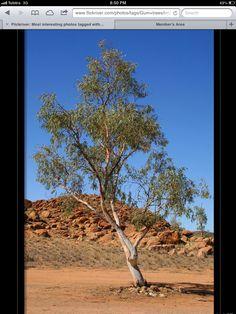 A Tree Like Alice