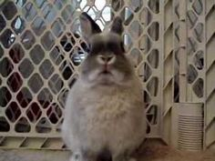 HYSTERICAL!! This Bunny Goes On An Absolute Rampage, And I Can't Stop Laughing!!