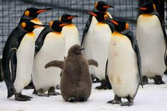 National Penguin Awareness Day - CSMonitor.com