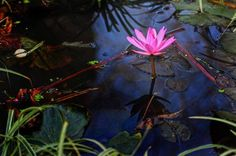 Surreal Lily! Photo by Samir Dash -- National Geographic Your Shot