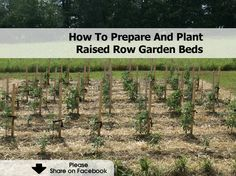 How To Prepare And Plant Raised Row Garden Beds - www.hometipsworld...