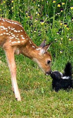 Oh deer!!