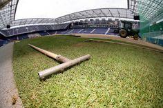 Der Naturrasen wird verlegt. Salzburg, Red Bull, Baseball, Nature, Nice Asses