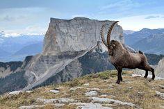 King of the Mountain - Imgur