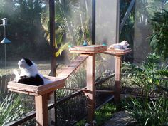 Cat garden. Would love to do this one day.. since my kitty's are indoor and they would love to go out! Kept in to protect them from the coyotes.