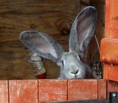 What ears!