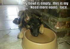 My bowl is empty. ..