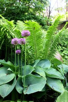 Fern, Hosta and Allium.