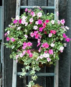 A living wreath <3