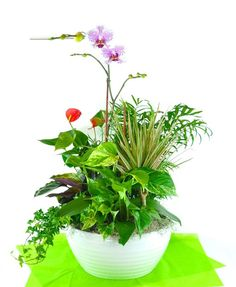 Anthurium, Cymbidium, Pothos - A tropical paradise