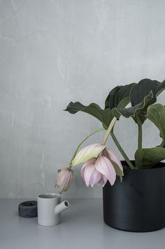 art prints with plants - April and mayApril and may
