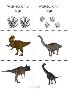 Montessori dinosaur activity for preschool or casa ideal for preschool children to see which dinosaurs walked on 2 legs and which walked on 4 legs. Link to math?