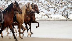 La fotógrafa que lleva por el mundo a los caballos peruanos de paso [FOTOS]