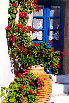 Blue door, potted bougainvillea  embroidered curtains in Kythira , Greece