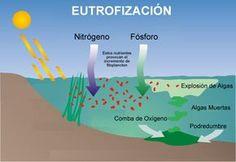 #Contaminación por #eutrofización