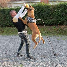 Miękki gryzak dla psa przedstawiony w różnych naturalnych materiałach: materiał ringowy, mocna juta oraz materiał ringowy z wstawką ze skóry. Dogs, Animals, Jute, Animales, Animaux, Pet Dogs, Doggies, Animal, Animais