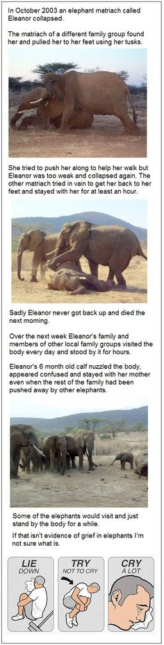 :'( elephants