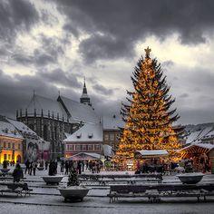 Winter Christmas Tree Brasov - Romania