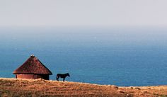A donkey stands outside a traditional Xhosa hut along the dramatic Transkei coastline. Due to lack of develpment and very little access, this stretch of coastline remains rural and largely untouched, earning it the name, the Wild Coast. Stunning Photography, Landscape Photography, Places Around The World, Around The Worlds, Africa Travel, Countries Of The World, Continents, Travel Around, South Africa