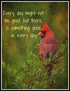 Cardinal bird quotes dads 55 new Ideas Great Quotes, Quotes To Live By, Me Quotes, Qoutes, Motivational Quotes, Bird Quotes, Phrase Choc, Cool Words, Wise Words