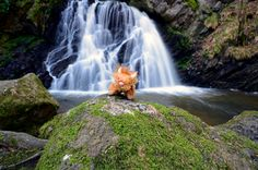 Highland Coo (cow) at Fairy Glen, Black Isle, Scotland, 11.7x16.5in Print by Moodlandscapes on Etsy