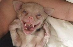 #Conocé la historia del perro – murciélago que enamora - Diario La Provincia SJ: Diario La Provincia SJ Conocé la historia del perro –…