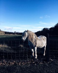 """So today a cute horsey said """"CHEESE"""" to me  while I was doing some work for one of my @uneedia clients in #DalgetyBay  Hope you all had a lovely Sunday too... #LoveAnimals #Pony #horse #styleblogger #scottishblogger"""