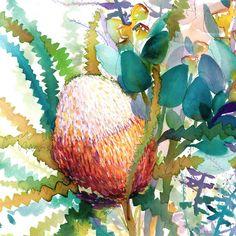 Australian Native Flowers, Australian Art, Australian Wildflowers, Watercolor Flowers, Watercolor Paintings, Watercolours, Painting Flowers, Floral Illustrations, Illustration Art