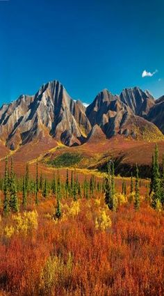 There are many reasons why travelers head to Denali Park in Alaska. Being one of the most beautiful destinations in Alaska surely makes this park a favorite, especially among nature lovers and photography enthusiasts.
