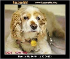 Urgent: This animal could be euthanized if not adopted within the next day or two.   Animal ID: A0917798Lady aka Snooki (female)  Cocker Spaniel  Age: Senior  Health:Spayed  SENIOR ALERT! Owner surrender. Needs the comfort of a loving home ASAP.   Animal Location:  Animal Care & Control of NYC - Manhattan Ctr 326 East 110th Street (between 1st and 2nd Aves.) New York County New York, NY 10029 MAP IT!  Contact: 1-212-788-4000   Facebook:Email to ...