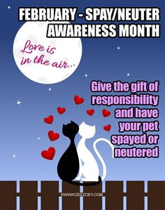 February - Spay Neuter Awareness Month